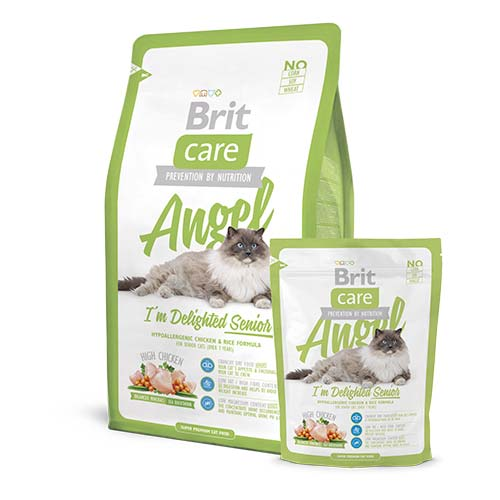 brit-care-cat-angel-i-m-delighted-senior