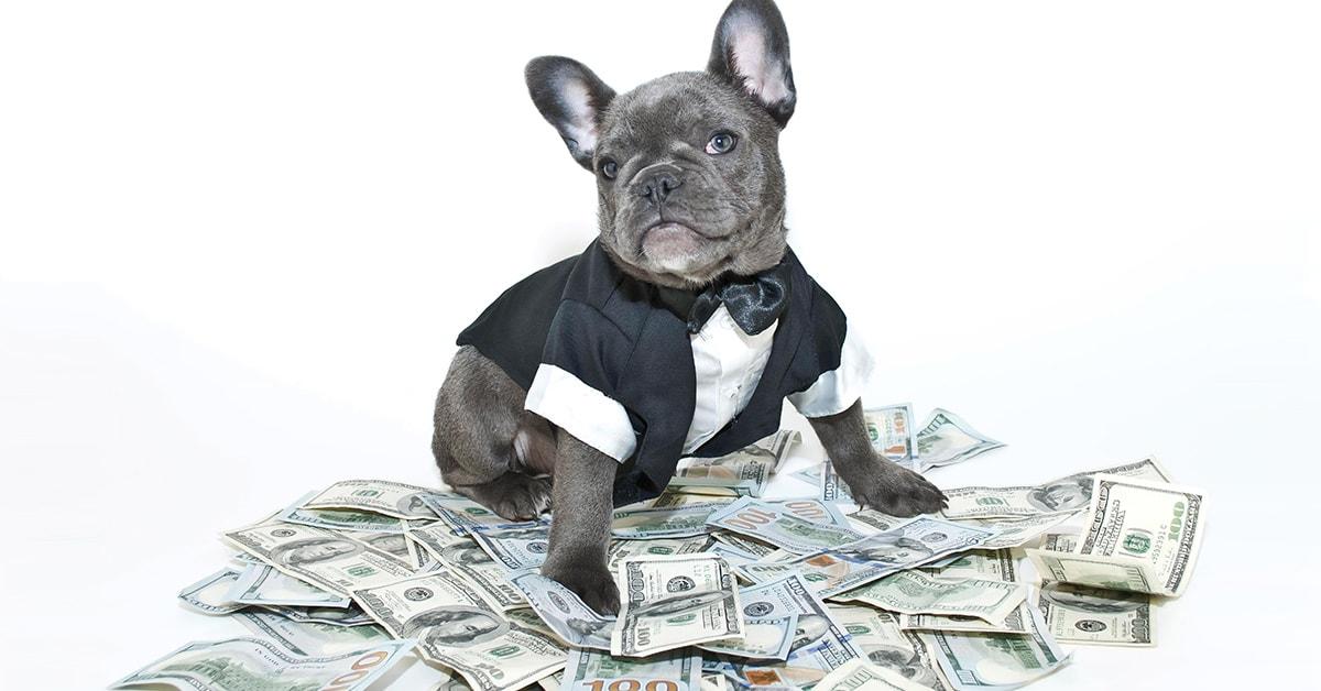 Pes v smokingu sedi na denarju.