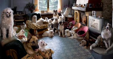 (Pre)veliko psov v majhnem stanovanju.